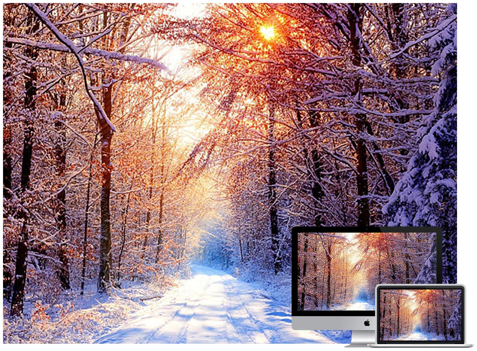 winter forest 2 - Bộ ảnh nền mùa Đông đẹp dành cho máy tính