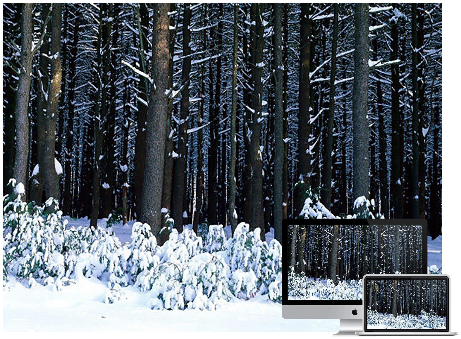 winter forest - Bộ ảnh nền mùa Đông đẹp dành cho máy tính
