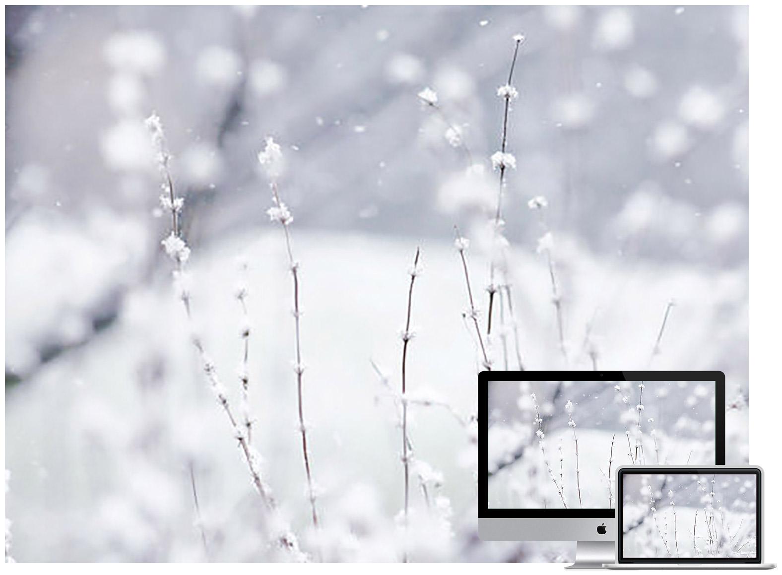 winter wonderland - Bộ ảnh nền mùa Đông đẹp dành cho máy tính