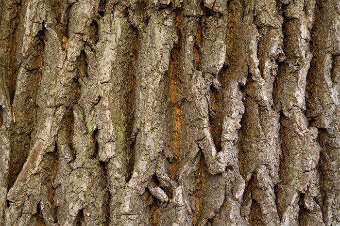 Bark Nature Wood Texture