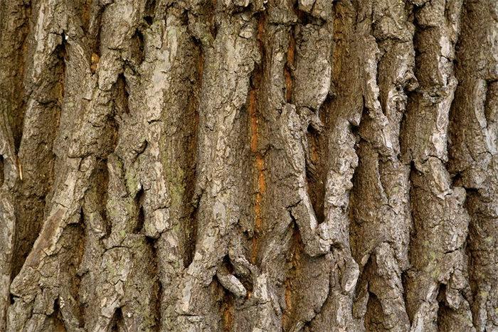 Bark Nature Wood Texture