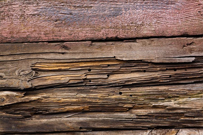 Plank Rotten Wood Woodworm Texture