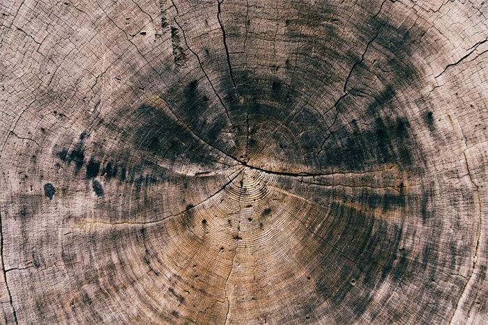 Tree Stump, Crack Wood Texture