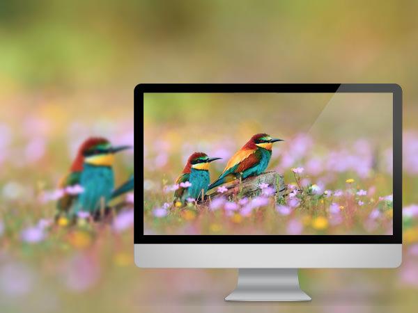 Birds Flower